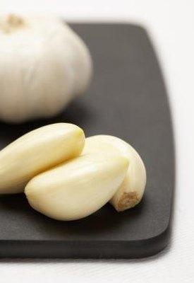Garlic Interacting With Probiotics