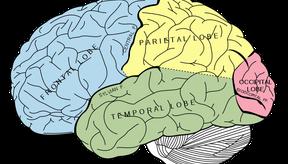 Combinar los ejercicios de ambos hemisferios es la forma más efectiva de unir las dos mitades de tu cerebro y comenzar a pensar en forma integral.