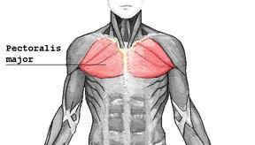 Los músculos pectorales se pueden desgarrar cuando se los estira demasiado.