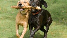 Los perros son buenos compañeros para salir a correr.
