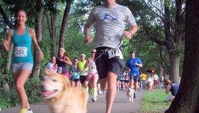 Compite en una carrera con tu perro.