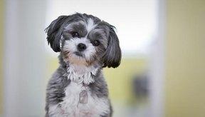 Los perros provocan alergia debido a la caspa que botan.