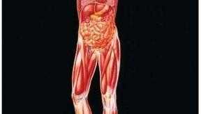 Hay hormonas esteroides naturales y sintéticas.
