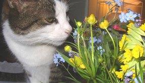 Los gatos también pueden padecer alergias.