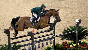 Existen una variedad de tratamientos para aliviar los dolores de las articulaciones de tu caballo.