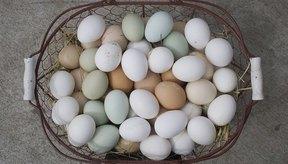 Los huevos pueden producir alergias..