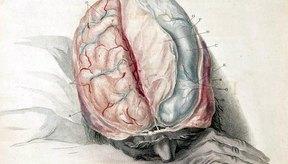 Los tratamientos para la enfermedad tiroidea pueden producir dolor de cabeza.