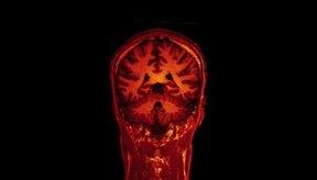 La dopamina y la serotonina son dos neurotransmisores necesarios para muchos aspectos de la conducta humana.