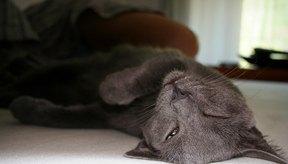 Considera los pros y contras de la sedación antes de darle medicamentos a tu gato.
