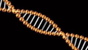 No tendrás una úlcera probablemente debido a la genética.