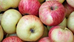 La sidra de manzana se hace de la fermentación de la sidra de manzana.