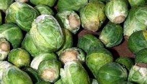 Las coles de bruselas tienen un contenido alto de fructanos.