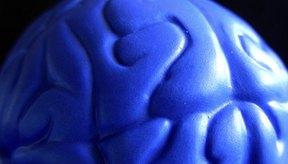 La dopamina es una sustancia química del cerebro.