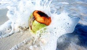 El aceite de coco es uno de los aceites más saludables que puedes aplicar en tu piel.