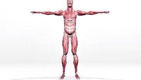 Síntomas de un desgarro muscular.