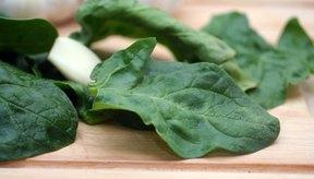 La espinaca y otros vegetales de color verde oscuro contienen altos niveles de calcio.