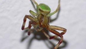 Los insectos que parasitan más efectivamente a los humanos son frecuentemente muy pequeños.