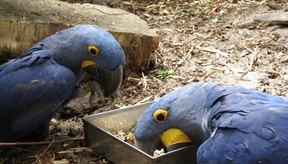 La conjuntivitis aviar a menudo va acompañada de dificultad respiratoria.