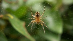 Las picaduras de araña pueden infectarse si la zona no se mantiene limpia.