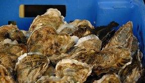 Las ostras crudas pueden causar una reacción alérgica o una intoxicación alimentaria.