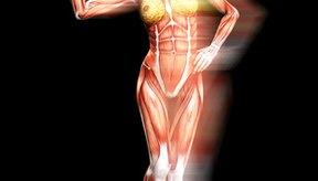 La masa libre de grasa incluye músculo, hueso, tendones, órganos y agua.