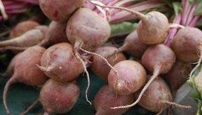 Las remolachas son una buena fuente de nutrientes importantes.