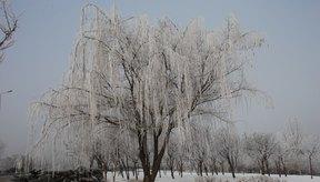 La pérdida de humedad en la piel es provocada por el clima frío.