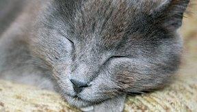Un gato enfermo normalmente está letárgico y puede requerir cuidados constantes durante su recuperación.
