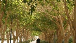 Caminar es una de las formas más fáciles y más convenientes de actividad cardio.