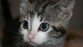 Un gatito nuevo puede temblar de miedo o de excitación.