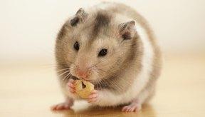 Los hámsters tienen generalmente colas más pequeñas que los ratones.