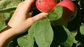Las comidas que se cosechan a mano en lugar de máquinas tienen proporciones bajas de contaminación.