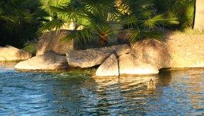 Las propiedades absorbentes de la bentonita de sodio hacen que sea una buena selladora para un estanque.