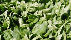 La espinaca es una verdura que contiene gran cantidad de hierro.
