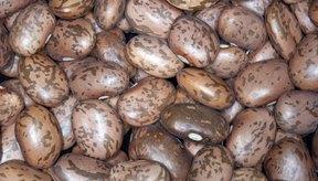 Los frijoles secos son una gran fuente magra de hierro.