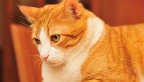Si ocurre alguna complicación, hay que llevar al gatito a una consulta con un veterinario lo más rápido posible.