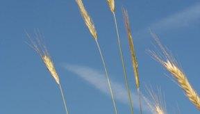 Los cereales Glucerna proporcionan 5 g de fibra dietética, cuyos beneficios incluyen regular los niveles de azúcar en la sangre, así como bajar el colesterol y reducir el riesgo de estreñimiento.