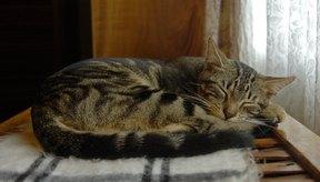 Tu gato necesitará descanso adicional para recuperarse totalmente de una infección bacteriana.