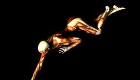 Los nervios controlan los movimientos musculares a través de impulsos nerviosos.