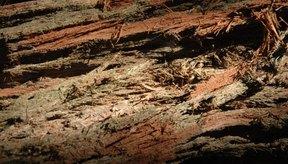 La yohimbina es el principal ingrediente activo del yohimbe y se encuentra en la corteza.