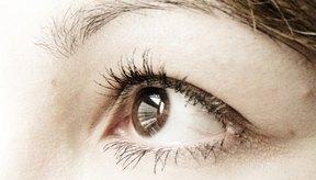 Hay dos tipos de fotorreceptores en la retina del ojo: los bastones y los conos.