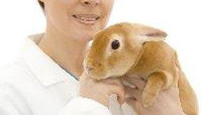 Si tu perro o gato mata a una ardilla, consulta a tu veterinario.