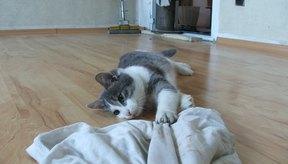 Adecuada puede ayudar a asegurar un gato feliz y saludable.