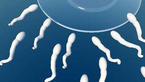 Hay algunos pasos simples para ayudar a mejorar la fertilidad de un hombre.