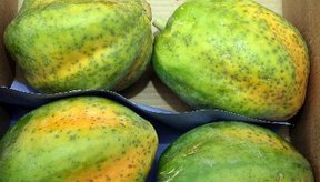 Incluso las papayas semimaduras contienen látex.