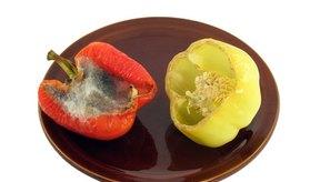 Es recomendable desechar los alimentos blandos con moho.