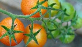 Los tomates contienen ácido cítrico, que puede ayudar a quitar las espinillas.