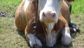 Los materiales de cuero alternativo ahorran muchas vidas animales.