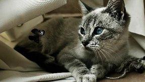 Los huesos rotos en los gatitos sanan más rápido que en los gatos adultos.