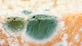 El tipo y severidad de los síntomas por inhalación de moho dependen de cuánto fue ingerido o inhalado.